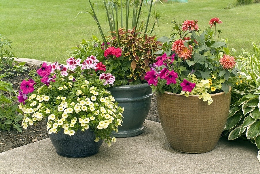 Summer gardening tips for your container plants - Summer time gardening tips ...
