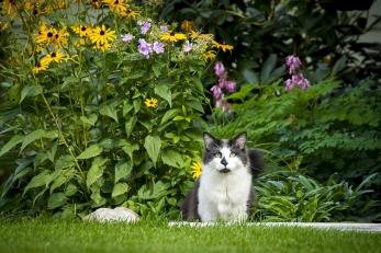 A fluffy cat sitting amongst garden plants