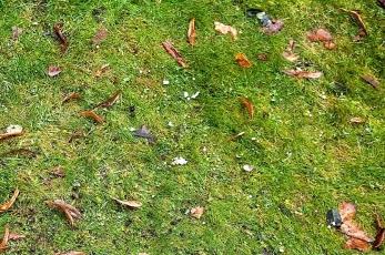 A leaf strewn lawn