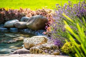 A garden pond with lavender plants